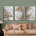 cheap Stretched Canvas Prints-Stretched Canvas Print Art Still Life White Conch Set of 3