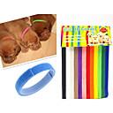 preiswerte Halsbänder, Geschirre und Leinen für Hunde-Katze Hund Halsbänder ID Schilder Regolabile / Einziehbar Regenbogen Nylon Regenbogen