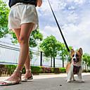 זול רצועות וקולרים לכלבים-כלב רתמות רתמת בטיחות לכלב / רתמה לכלב למושב רכב עמיד למים נושם חוזרמתכווננת אחיד סְפוֹג גוּמִי כתום אדום ירוק
