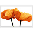 cheap Floral/Botanical Paintings-Oil Painting Hand Painted - Floral / Botanical Comtemporary Canvas