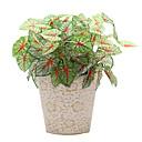 ieftine Flor Artificiales-Flori artificiale 1 ramură Clasic stil minimalist / Pastoral Stil Plante Față de masă flori