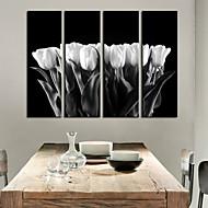 halpa -Canvastaulu taide kasvit White Tulip Sarja 4