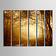cheap Prints-E-HOME® Stretched Canvas Art Woods In The Mist Decoration Painting  Set Of 6