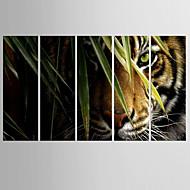 Недорогие -Отпечатки жикле Животное Modern Пастораль,5 панелей Холст Вертикальная Печать Искусство Декор стены For Украшение дома