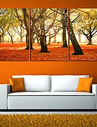 Недорогие -Отпечатки на холсте Наборы холстов ботанический 3 панели Горизонтальная С картинкой Декор стены Украшение дома