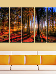 Stretched Canvas Print Art Landscape Woods in Sunrise Set of 5
