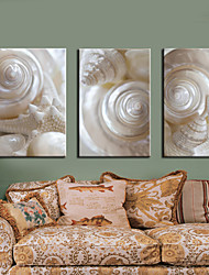 cheap -Stretched Canvas Print Art Still Life White Conch Set of 3