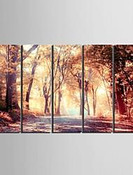 e-Home® allungata tela arte la caduta della mangrovia set pittura decorativa di 5
