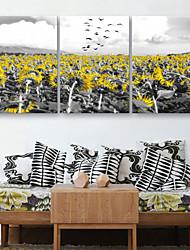 abordables -e-HOME estiró arte girasol determinado de la pintura decorativa de la lona de 3