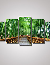 5 Panels Green Bamboo Landscape Picture Print Modern Wall Art on Canvas Unframed