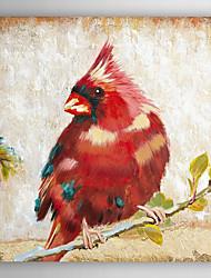 ručně malované olejomalba zvíře červená kardinál s napnuté rámem