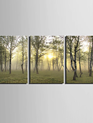 cheap -E-HOME® Stretched Canvas Art Woods Decoration Painting  Set Of 3