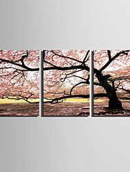 cheap -E-HOME® Stretched Canvas Art Cherry Tree Decorative Painting Set of 3