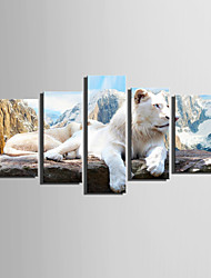 cheap -E-HOME Stretched Canvas Art The Top Of The Mountain Lion Decoration Painting  Set of 5