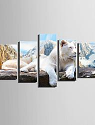 Animal Estilo Europeu,5 Painéis Tela Vertical Impressão artística Decoração de Parede For Decoração para casa