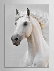cheap -Famous Animals Classic European Style, One Panel Canvas Vertical Print Wall Decor Home Decoration