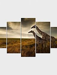 Estampados de Lonas Esticada Animal Estilo Moderno,5 Painéis Tela Qualquer Forma Impressão artística Decoração de Parede For Decoração