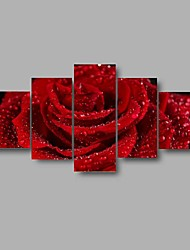 Modern Rose Flower Printed Painting On Canvas 5 Piece Wall Pictures For Linving Room Decoration (No Frame)