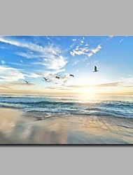 Sea gull Modern Artwork Wall Art for Room Decoration
