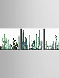E-HOME Stretched Canvas Art Simple Watercolor Cactus Decoration Painting Set Of 3