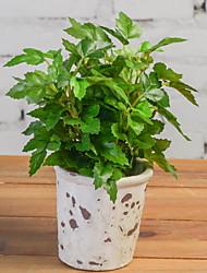 abordables -Flores Artificiales 1 Rama Clásico Moderno / Contemporáneo Plantas Flor de Mesa