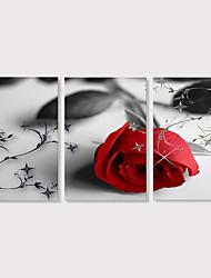hesapli -Boyama Gerdirilmiş Tuval Resimleri - Fotografik Çiçek / Botanik Modern Üç Panelli