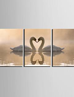 Imprimeu pânză întins Set Canava Animale Modern,Trei Panouri Canava Orizontal Imprimeu Decor de perete For Pagina de decorare