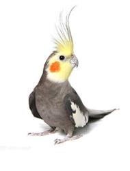 Tilbehør til fugl